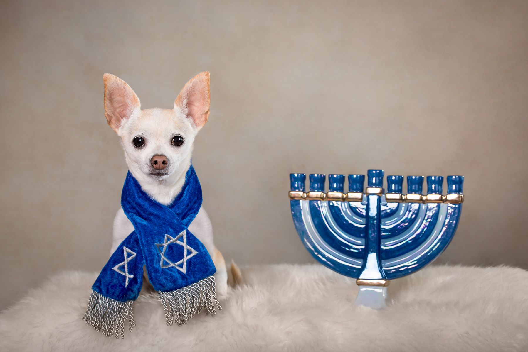 Hanukkah Pet Portraits from Vasi Studios