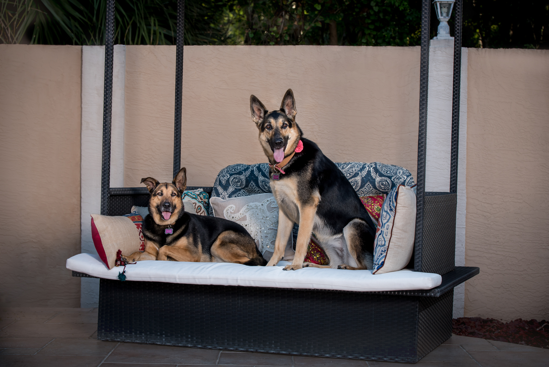 Large Pet Photography South Florida
