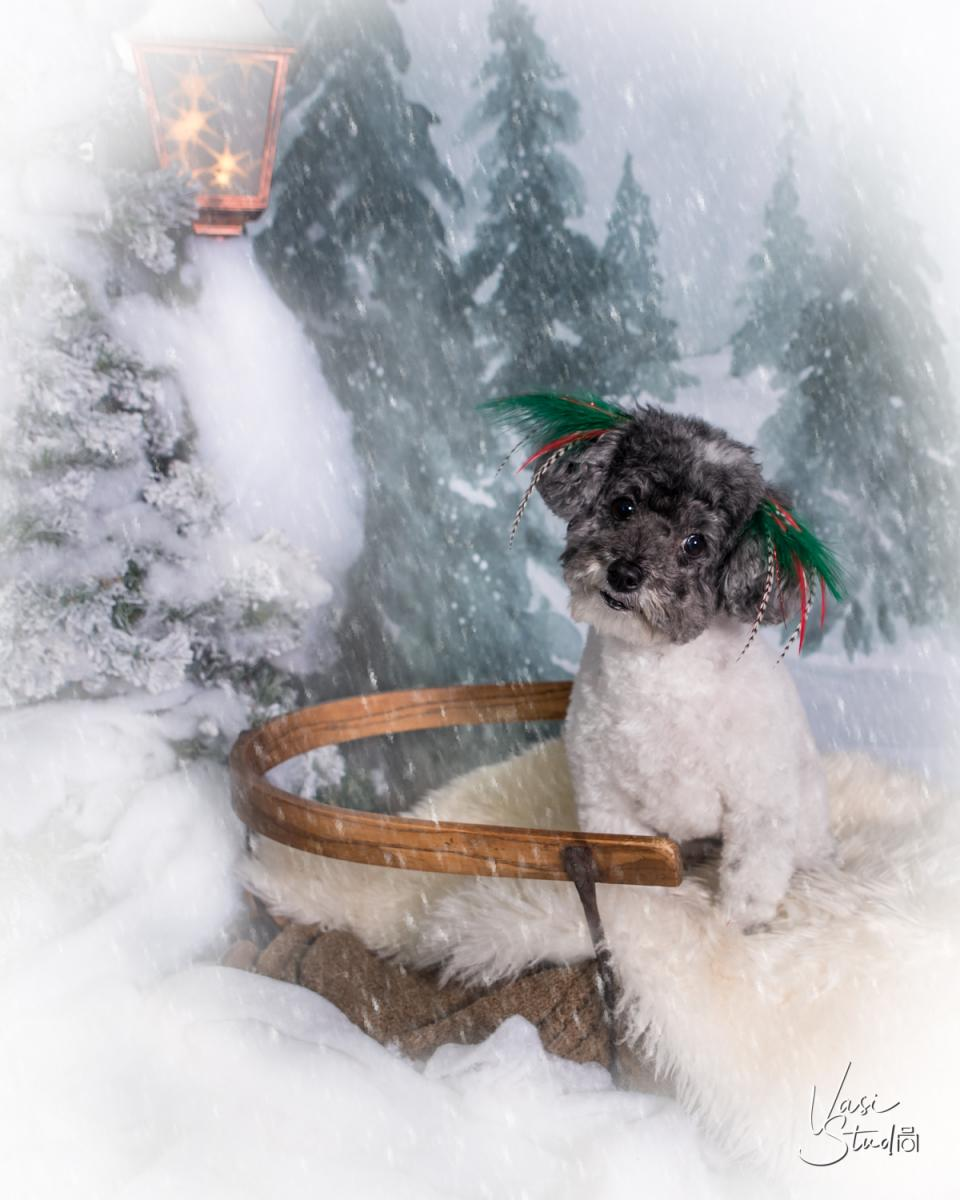 Holiday Pet Photography in Palm Beach.