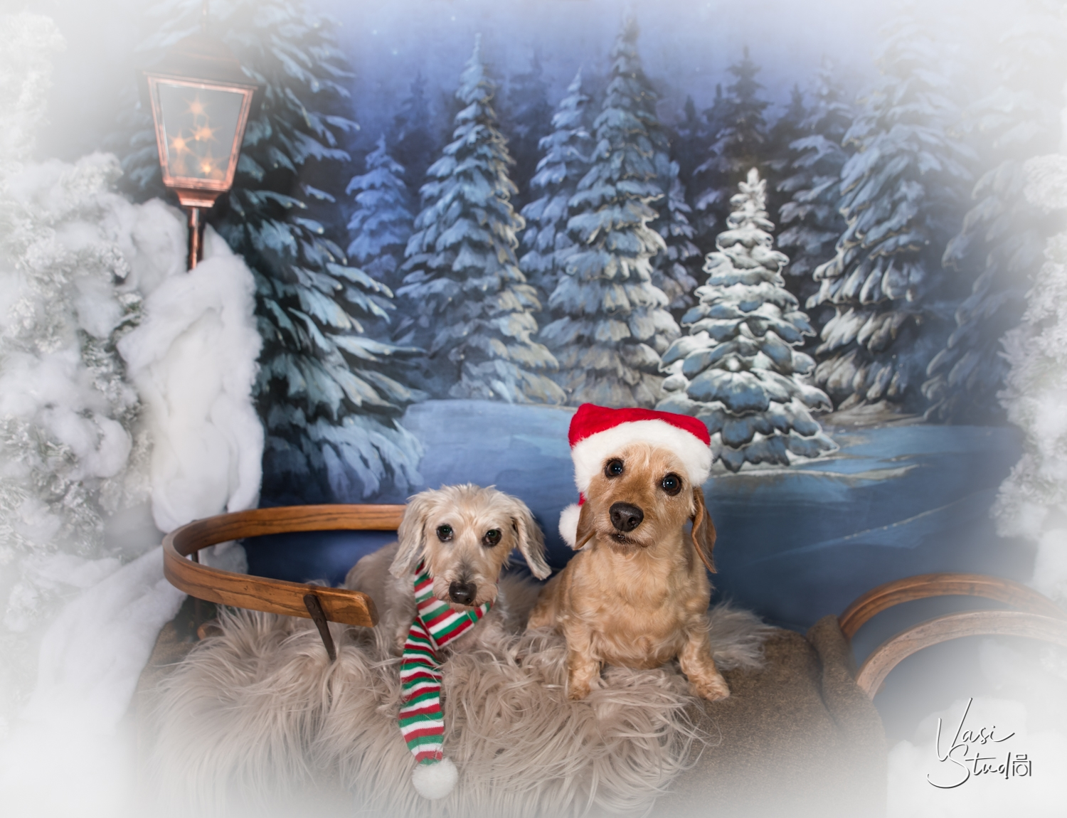 Professional holiday pet photos