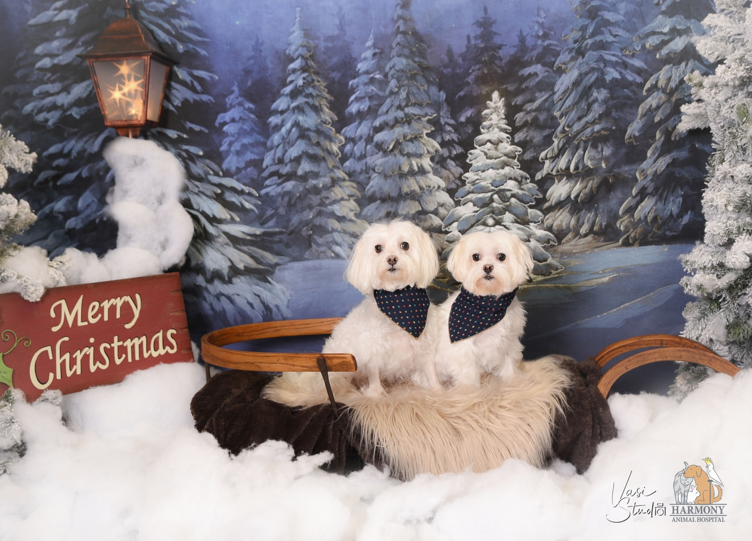 Pet Holiday Portraits at Harmoly Animal Hospital!