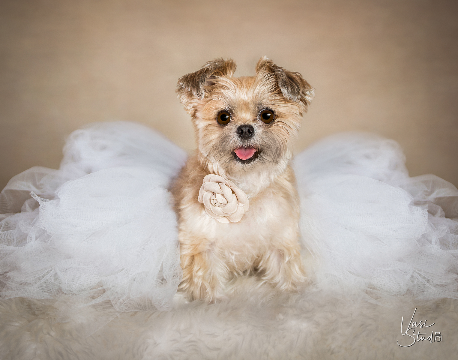 To schedule a pet photography session in Palm Beach Gardens, call 561-307-9875