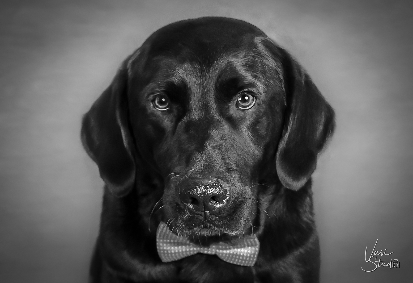 Our portraits capture the unique personalities of your dogs and cats.