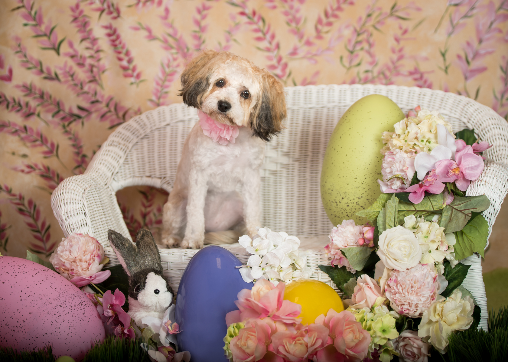 Vasi Siedman Pet Photographer