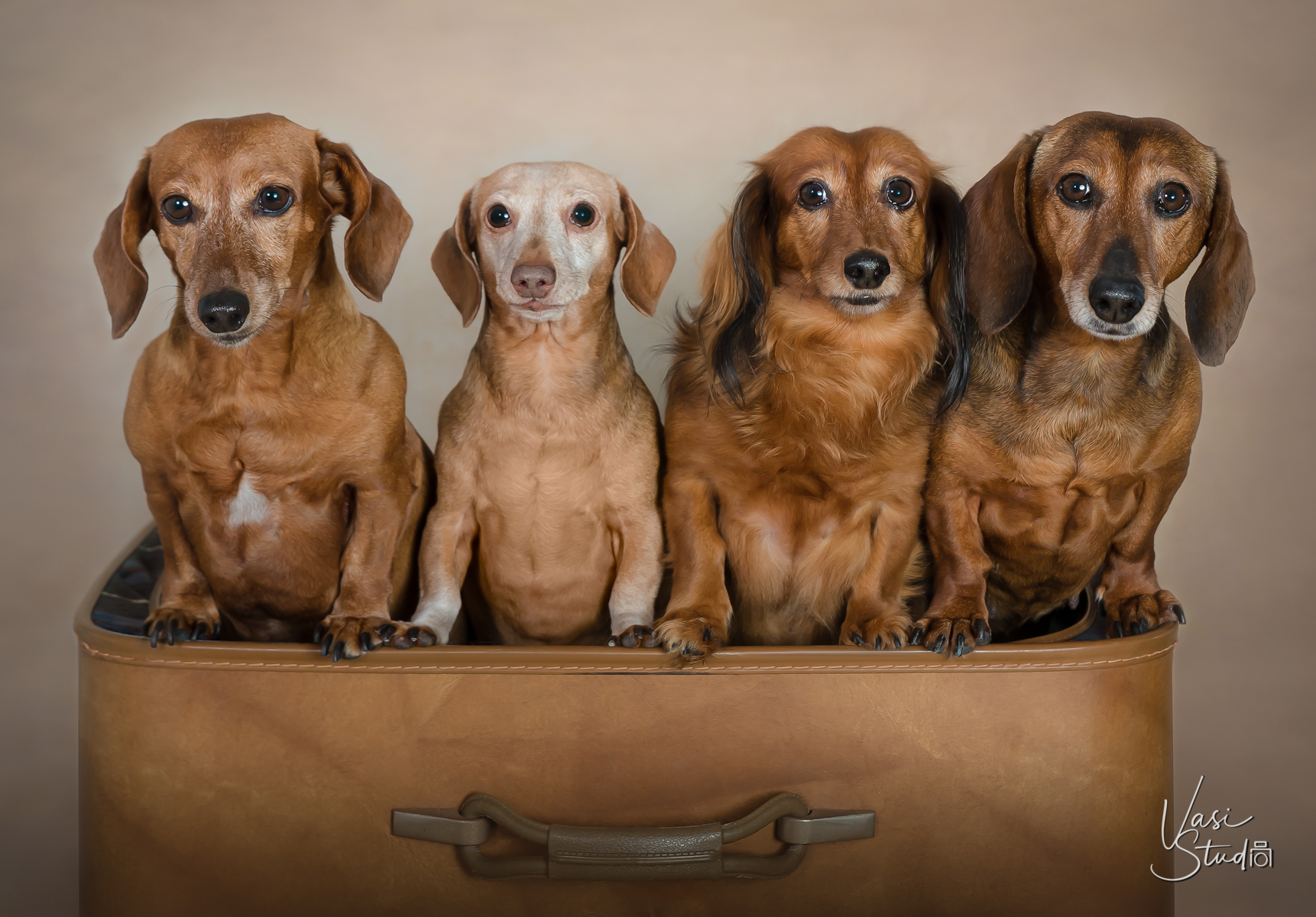 4 doggies, Vasi Studio is located in Palm Beach Gardens, FL.